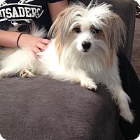Adopt A Pet :: Frankie - Garwood, NJ
