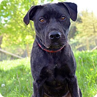 Adopt A Pet :: Flower - Delaware, OH