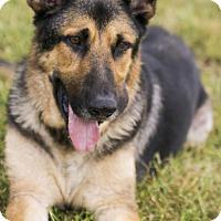 Adopt A Pet :: Barkley - Petaluma, CA