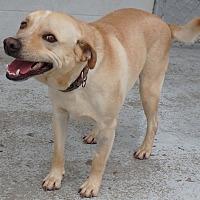 Adopt A Pet :: Shooter - Seguin, TX
