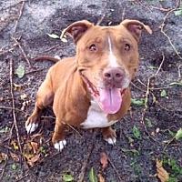 Adopt A Pet :: Penelope - Pompano Beach, FL