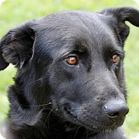 Adopt A Pet :: Lila - Portola, CA
