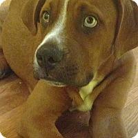 Adopt A Pet :: BENNY - Albuquerque, NM