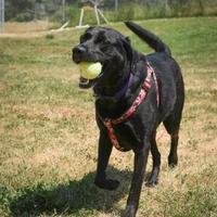 Adopt A Pet :: Princess - Missoula, MT