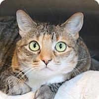 Adopt A Pet :: Fern - Middletown, CT