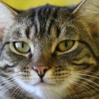 Adopt A Pet :: James - Fairfax, VA