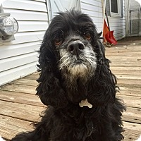 Adopt A Pet :: Tootsie 9yr Adopted - Mentor, OH