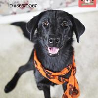 Adopt A Pet :: Millie - Gulfport, MS