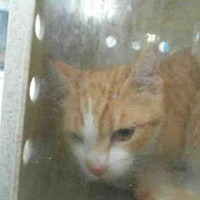 Adopt A Pet :: WYATT - San Martin, CA
