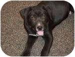 Labrador Retriever Mix Puppy for adoption in Adamsville, Tennessee - Graham (pending adoption)