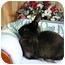 Photo 1 - Lionhead Mix for adoption in Newport, Delaware - Esmerelda