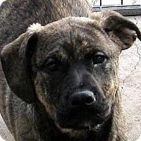 Adopt A Pet :: Baby Thor - Oakley, CA