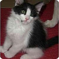 Adopt A Pet :: Poncho - Davis, CA