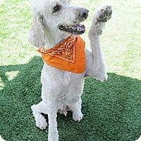 Adopt A Pet :: Walnut - Santa Ana, CA