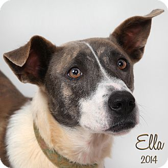 Terrier (Unknown Type, Medium) Mix Dog for adoption in New Orleans, Louisiana - Ella