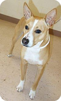 Carolina Dog Mix Dog for adoption in McDonough, Georgia - Peyton