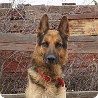 Adopt A Pet :: Blake - Hamilton, MT