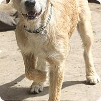 Adopt A Pet :: Eloise - Norwalk, CT