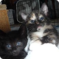 Adopt A Pet :: Brutus and Hercules - Dallas, TX