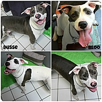 Adopt A Pet :: Dusse & Bloo - Forked River, NJ