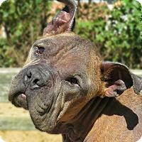 Adopt A Pet :: Vito - West Babylon, NY
