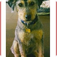 Adopt A Pet :: Ricardo (in adoption process) - El Cajon, CA