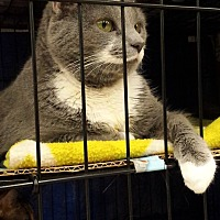 Adopt A Pet :: Molly - Coshocton, OH