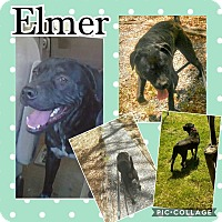 Adopt A Pet :: Elmer - Unionville, VA