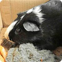 Adopt A Pet :: *Urgent* Parker - Fullerton, CA