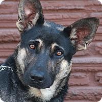 Adopt A Pet :: Engel von Elsnig - Los Angeles, CA