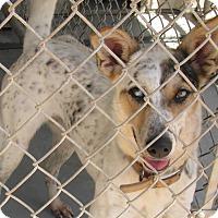 Adopt A Pet :: Sarah - Groton, MA