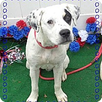 Adopt A Pet :: Chip - Tampa, FL