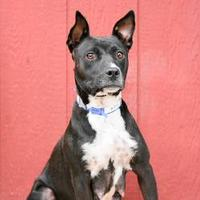 Adopt A Pet :: 1024-16 - Brighton, CO