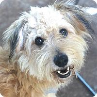 Adopt A Pet :: Simpson - Woonsocket, RI