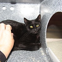 Adopt A Pet :: Sarah - Henderson, NC