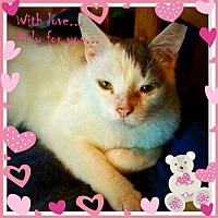 Adopt A Pet :: Beuford (Guest) - Owings Mills, MD