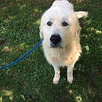 Adopt A Pet :: Polar - in NH - Lee, MA
