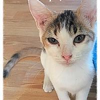 Adopt A Pet :: April MKK - Albany, NY