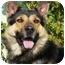 Photo 3 - German Shepherd Dog/Husky Mix Dog for adoption in Los Angeles, California - Billy von Haegele
