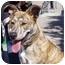 Photo 2 - German Shepherd Dog/American Pit Bull Terrier Mix Dog for adoption in Berkeley, California - Harriet