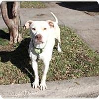 Adopt A Pet :: Valentine - justin, TX
