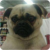 Adopt A Pet :: Butch - Phoenix, AZ