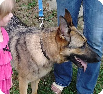 German Shepherd Dog Dog for adoption in Louisville, Kentucky - Tia