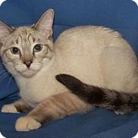 Adopt A Pet :: K-Stella1-Stefan - Colorado Springs, CO