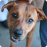 Adopt A Pet :: Tritan - Canoga Park, CA