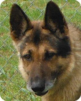 German Shepherd Dog Dog for adoption in Cedartown, Georgia - 26963010