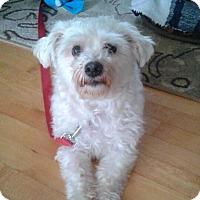 Adopt A Pet :: Nugget - Rigaud, QC