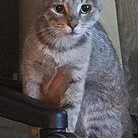 Adopt A Pet :: Latta - Hayes, VA