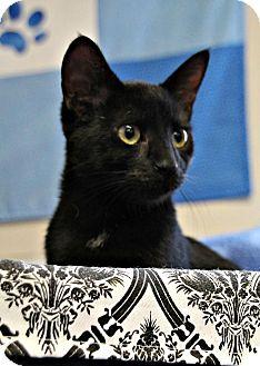 Domestic Shorthair Kitten for adoption in Marietta, Georgia - Gabby