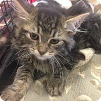 Adopt A Pet :: Theo - San Ramon, CA